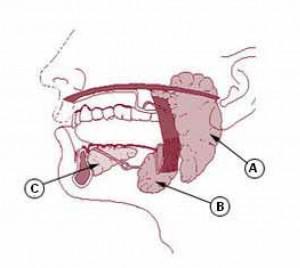 Aandoeningen aan de speekselklieren